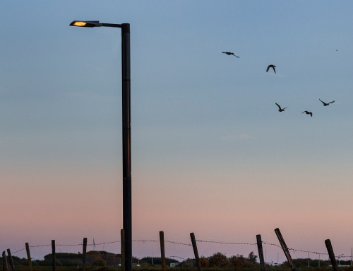 New solar solution: Soluxio Wildlife Friendly lighting